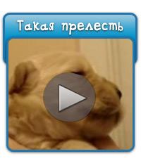 video_prelest