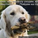 Cмешные картинки животных
