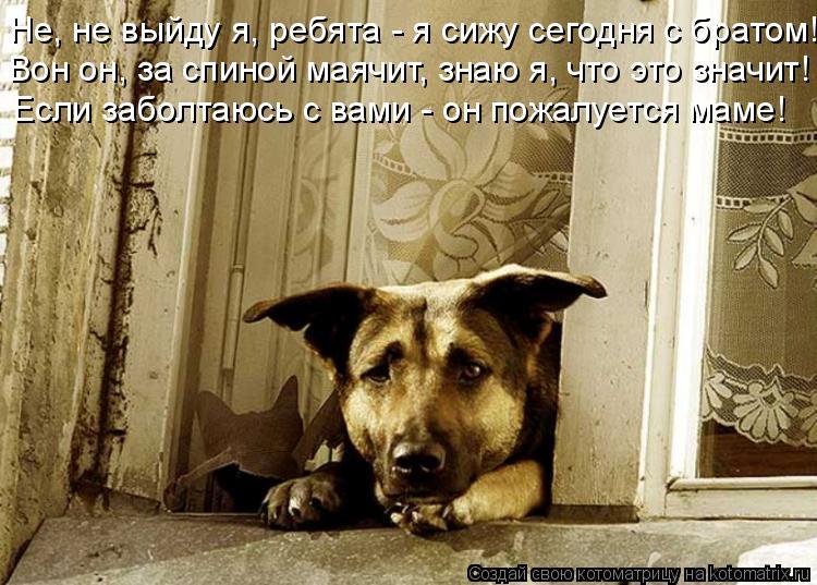 Cмешные картинки животных с надписями ...: superpesik.ru/cmeshnye-kartinki-zhivotnyx-s-nadpisyami.html