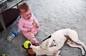 Собака и ребенок прикольное видео