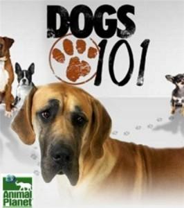 Введение в собаковедение смотреть онлайн