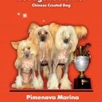 Питомник фила бразилейро и китайских хохлатых собак