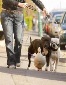 Животные напрокат