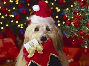 Новый Год Картинки Собак