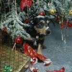 Новый Год картинки,фото собак