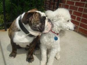 Противозачаточные таблетки для собак