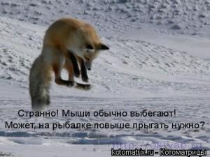 Cмешные картинки животных с надписями