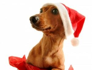 Собака это не подарок