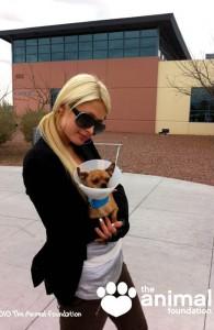 Пэрис Хилтон завела новую собаку