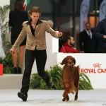 Международная выставка собак в милане Milano International Dog Show