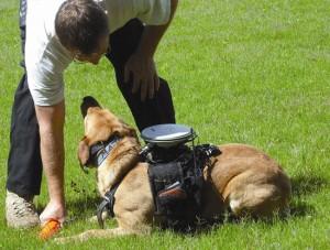 Собаками будут управлять через GPS