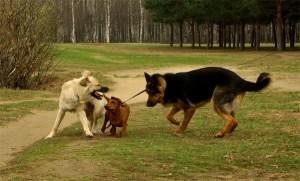 Набрасывание на собак