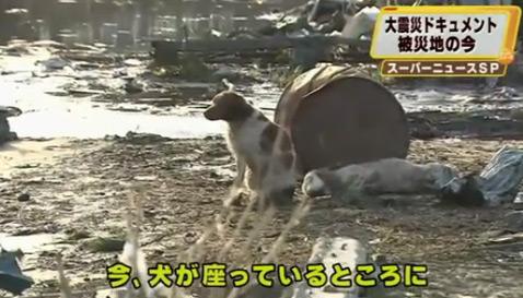 собаки японии
