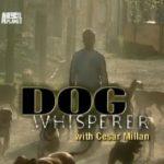переводчик с собачьего серия 54 смотреть онлайн