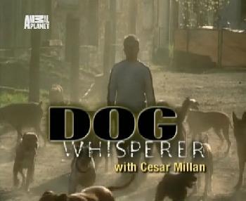 Переводчик с собачьего смотреть онлайн серия 5