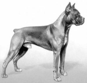 nemeckij-dog55