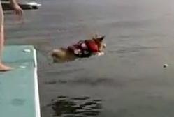 Cобака которая не умеет прыгать ВИДЕО в воду
