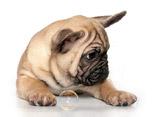 Породы собак, дог, смотреть собак, фото собак