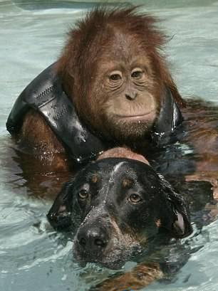 httpsuperpesik.rusobaka-i-orangutan.html1