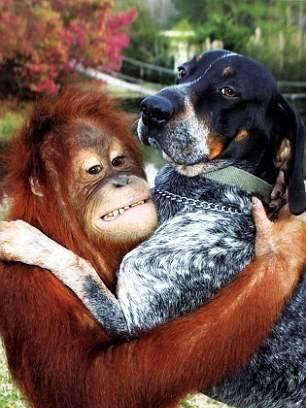 httpsuperpesik.rusobaka-i-orangutan.html2