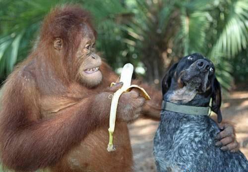 httpsuperpesik.rusobaka-i-orangutan.html3