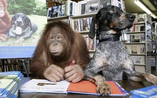 httpsuperpesik.rusobaka-i-orangutan.html5