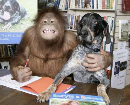 httpsuperpesik.rusobaka-i-orangutan.html6