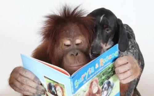 httpsuperpesik.rusobaka-i-orangutan.html7