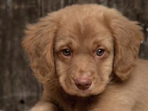 Как правильно выбрать породистого щенка