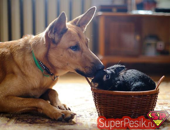 Декс и Вася фото - самое популярное фото собаки и кролика на Яндексе