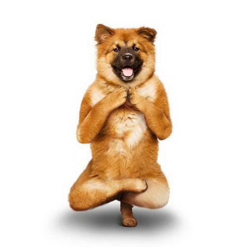собачья йога