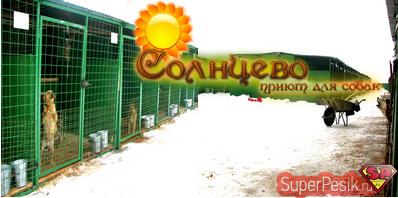 """""""Солнцево"""" - московский приют для собак!"""