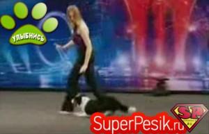 Супер выступление собаки на шоу Британия имеет талант ВИДЕО
