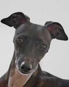 Корм Роял канин для собак