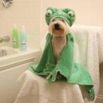Poки - cамaя известнaя польскaя собакa