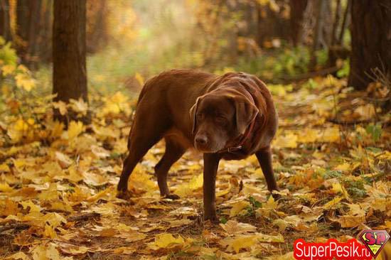 Осенняя фотоподборка