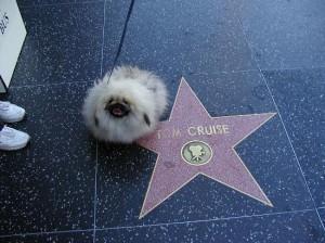В Голивуде Собакам  стали давать кинопремии