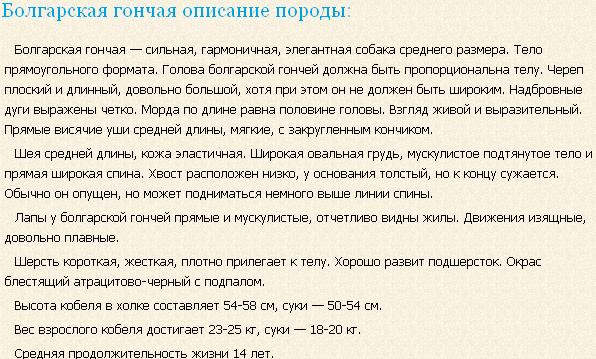 Описание породы болгарская гончая