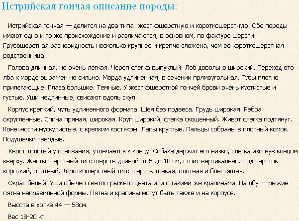 Описание породы истрийская гончая