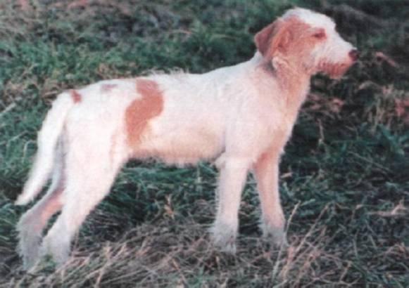 istrijskaya-gonchaya6