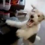 esli-na-sobaku-dunut-geliem-video