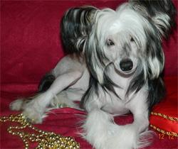 pitomnik-del-terro-perros