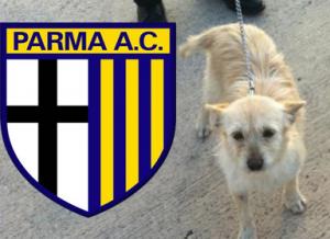 Acaya Parma