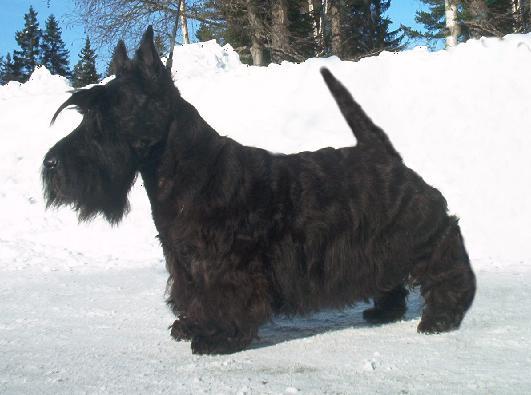 skotch-terer18