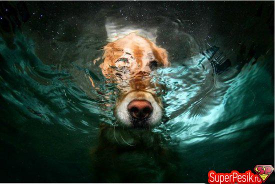 podvodnye-fotografii-sobak10
