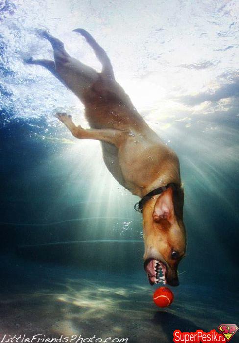 podvodnye-fotografii-sobak13