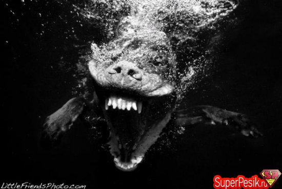 podvodnye-fotografii-sobak14