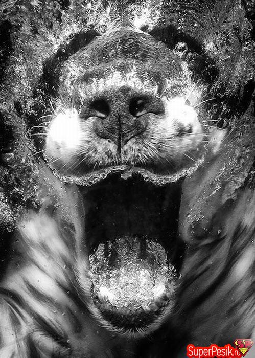 podvodnye-fotografii-sobak15