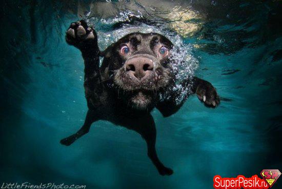 podvodnye-fotografii-sobak16
