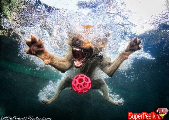 podvodnye-fotografii-sobak17